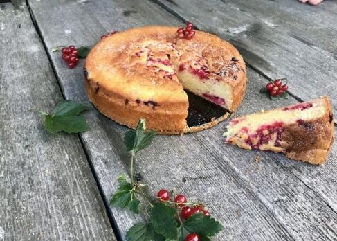 Schnelle Ribisel Torte